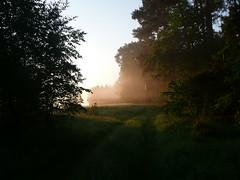 (aleksandra koncewicz) Tags: morning light shadow sunlight mist green nature forest sunrise path