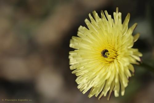 Fiore selvatico #2