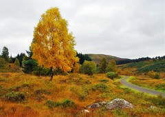 The glen Lyon to Loch Tay Road (eric robb niven) Tags: ericrobbniven glenlyon landscape walking perthshire tree forest