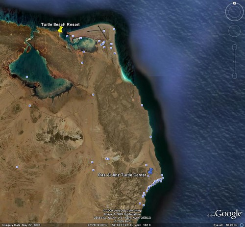 turtle beach 2 Ras Al Hadd and Raz al Jinz