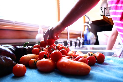 . emma washing the tomatoes .