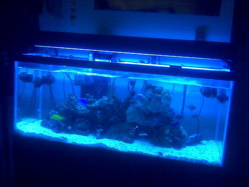The Current State of the Aquarium
