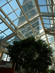 Boston Lookout (Jen's Stream) Tags: sky tree glass lines boston architecture clouds shopping insidegarden holidaysvacanzeurlaub gettyvacation2012
