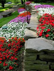 Fabulous Flower Beds (Puzzler4879) Tags: flowers stonewalls flowerbeds floralfantasy abigfave saveearth milleridgevillage flickraward a580 canona580 canonpowershota580 powershota580 theflowerbasket shootingstarsawards newgoldenseal longislandrestaurants