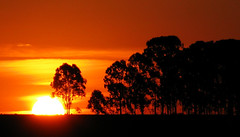 The beauty of nuclear fusion (Ric e Ette) Tags: trees sunset brazil orange sun tree minasgerais sol silhouette yellow brasil laranja mg amarelo prdosol eucalyptus rvore fama rvores silhueta eucalipto eucaliptos nuclearfusion fusonuclear gettyimagesbrasil