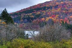 fall 09 (17) (image clicker) Tags: lake knob spruce