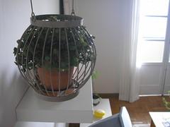 planta-dentro-casa