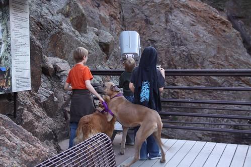 Kids & dogs.