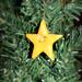 Lil' Grins Star