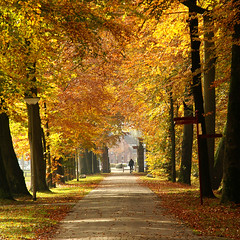 the avenue (atsjebosma) Tags: autumn trees light nature cyclist thenetherlands autumncolours explore groningen avenue leek herfstkleuren nienoord abigfave ysplix atsjebosma besstofmywinners
