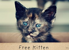 Free Kitten (astanse(Angela Stansell)) Tags: november light house 50mm cosmopolitan kitten natural action box lol kitty her ina angela neighbor took skittles 2009 named stays atmy florabella astanse