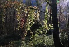 Luci sul bosco (enrix64) Tags: italy colors backlight forest lights italia colori calabria luce controluce bosco gmt sfumature bej mywinners orsomarso impressedbeauty flickraward fiumeargentino parcodelpollino rubyphotographer enrix enrix64
