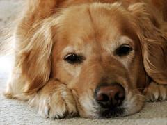 Sadie Ladie (TammyTalking) Tags: dog chien co cane female sadie canine hond perro hund doggy filters k9 perra   frflja