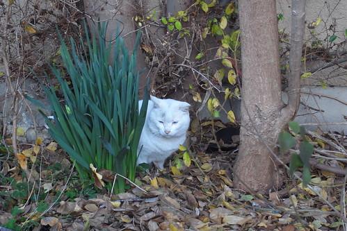 Today's Cat@20091215