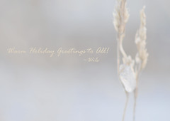 Warm Holiday Greetings !!! (Wils 888) Tags: county christmas winter holiday ny newyork ice season lens 50mm prime weed nikon december pastel nikkor happyholidays merrychristmas rockland springvalley d90 f14d holidaygreetings nikond90 usanikond90