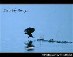 Let's Fly Away... (Vivek Dikshit) Tags: blue india lake reflection bird water photos beak cormorant ripples splash indore discovery claws madhyapradesh flyingbird sirpur letsflyaway canon1000d vivekdikshit