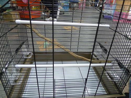 小鸚鵡們的舒適鳥籠