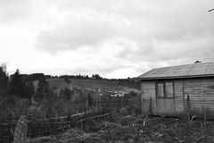 (Doris Venegas) Tags: monocromo paisaje campo anciana vino rostros ruido monocolor duotono casaantigua rutadelvino guarilige rostroanciano