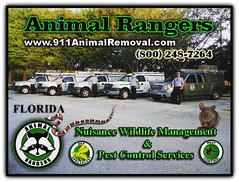 Animal Rangers - Nuisance Wildlife Management and Pest Control Services; Best critter removal team in Florida! www.911AnimalRemoval.com (Animal Rangers) Tags: generalcontractor education airconditioningservice poolmaintenance homeinspections propertymanagement pestcontrol critterremoval animalremoval wildliferemoval nuisancewildlife animalcontrol florida