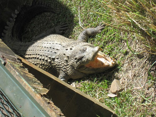 Cairns ZooCairns Zoo