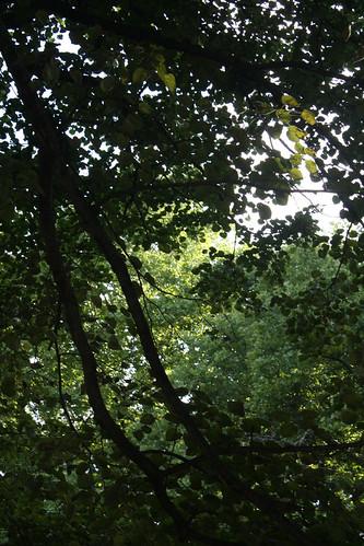 treesinpark