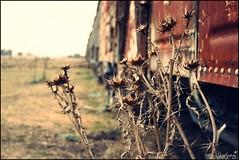Sequedad. (Martina Manuel) Tags: flores tren martin lugares estacion ser vane eze amistad fotografo cardos fotosssss graciasporlahermosatarde