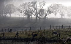 Manh de inverno (Claudio Marcon) Tags: trees brazil nature weather fog brasil clouds natureza campo fields neblina inverno rs niebla riograndedosul geada estaes fotoclube mywinners abigfave photoexplore claudiomarcon explorewinnersoftheworld claudiolmarconribeiro flickraward flickraward5