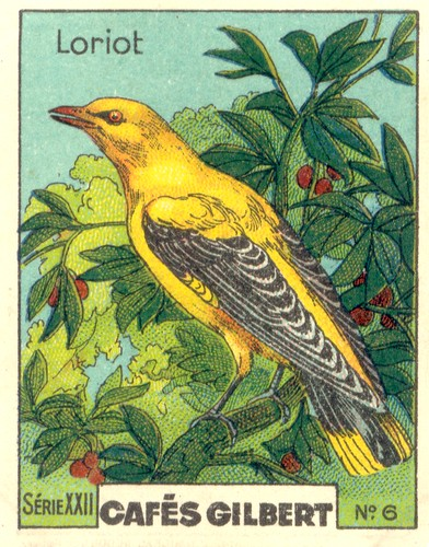 gilbert oiseau 5