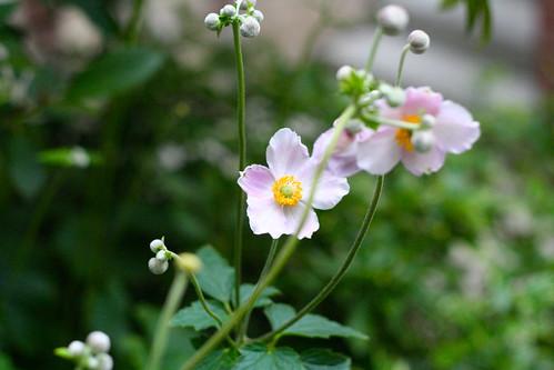 Ashland Flowers