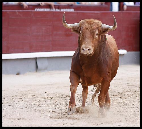 Toro de Javier Pérez Tabernero