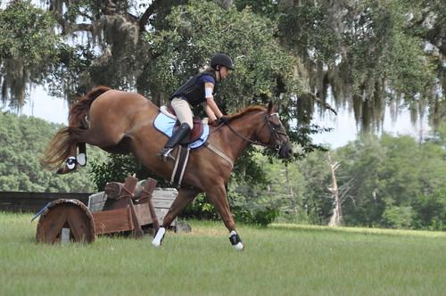 rocking horse 134