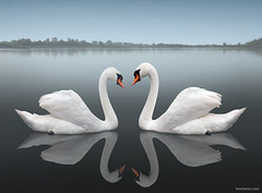 Together - Detail (Ben Heine) Tags: wedding wallpaper favorite cloud white lake male bird love beauty misty fog female swim river print fire freedom nager lyrics swan couple poem peace heart nikond70 duo horizon lac shakespeare compo coeur melody story digitalpainting flame together amour simplicity future novel forever mariage float titanic nuage copyrights simple eternity pure ensemble brouillard tender cygne perfection liefde peer symbolis