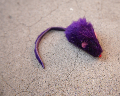 The Purple Mouse (before)