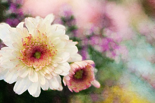 Painted Bouquet