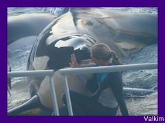 DSC09205_GF_GF (valkim) Tags: killer whale orca marineland orque