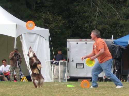 Frisbee Dogs - 2