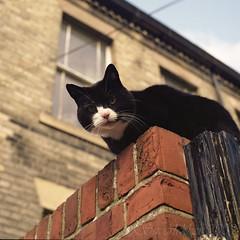 Cat Therapy (Superlekker) Tags: cat newcastle feline hasselblad fujifilm notmycat veryfriendly pro400 universitycat wellitknowsagoodthing trickytogetinfocus becauseitwouldtrytonuzzlemycamera