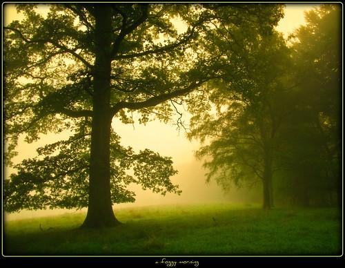 Hunstig - a foggy morning