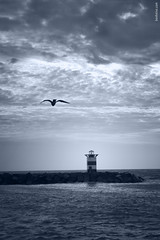 Freedom (Ben Heine) Tags: ocean morning blue light wild mer seagulls cold holland bird art nature netherlands monochrome birds clouds photography freedom coast fly seaside energy waves cloudy nikond70 stones scheveningen lumire pierre landmark zee libert pear land migration sunrays vagues paysbas phare mouette oiseaux jete boussole aquaticlife voler theartistery repre benheine aterscape rayondsoleil