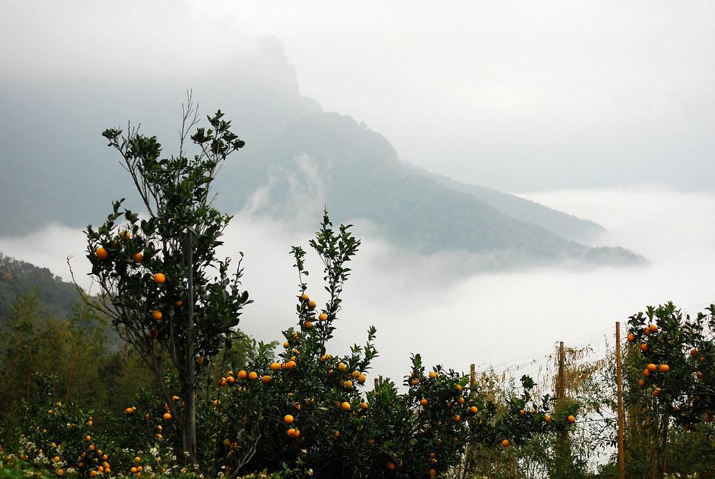 果園與雲海