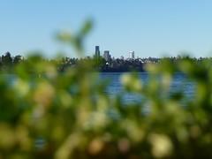 Seward Park, Seattle. December 26. (missjenn) Tags: seattle sewardpark