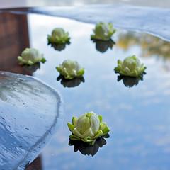 Reflecting (Paul in Japan) Tags: flower reflection reflecting peace spirit buddha buddhist reflect meditation tranquil