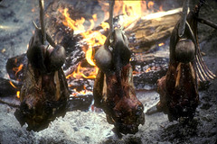 Caribou Heads Cooking