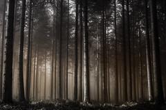 Metallic (Thomas Vanderheyden) Tags: forest foret landscape tree arbre fog brume brouillard ambiance atmosphere blackandwhite noiretblanc artistic art bichrome thomasvanderheyden fujifilm xt1 fuji paysage france