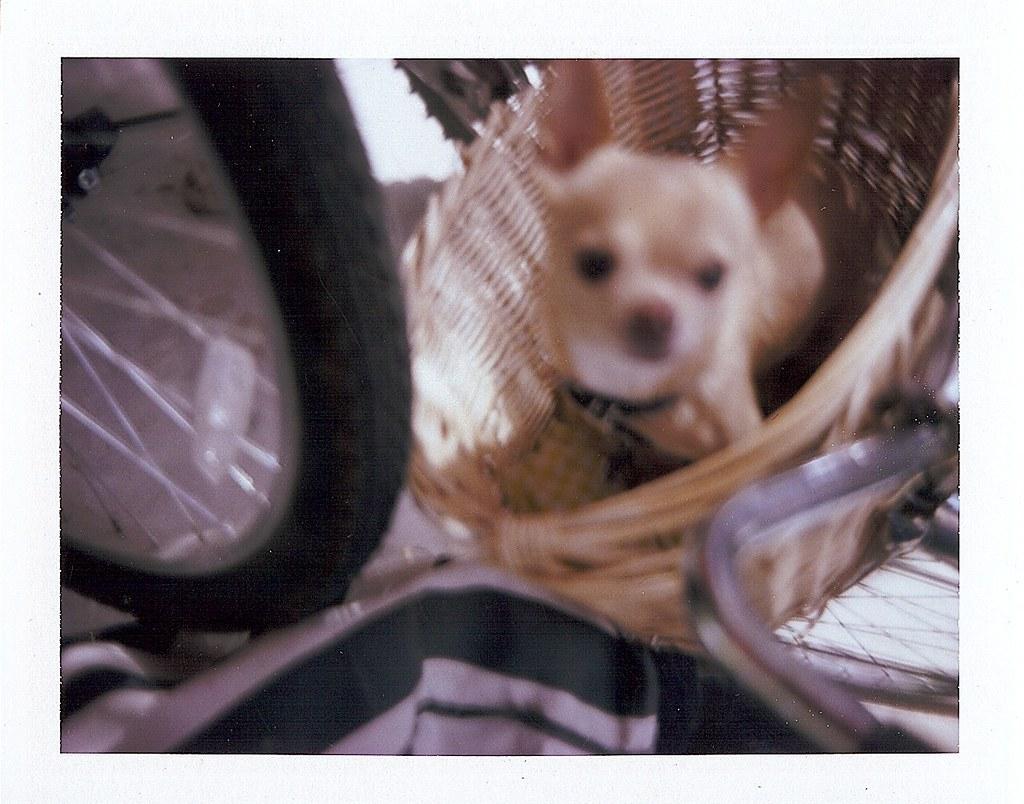 bike basket birthday boo-boo