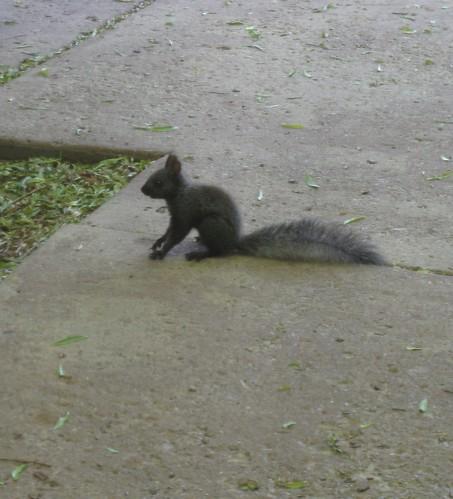 Squirrel 025