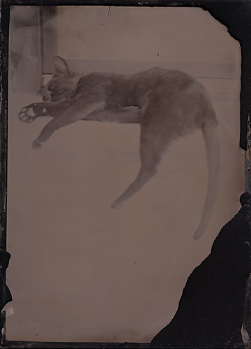 Venczel Attila: Black cat, 13x18cm, abrotípia