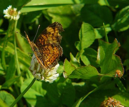 mini butterfly 2