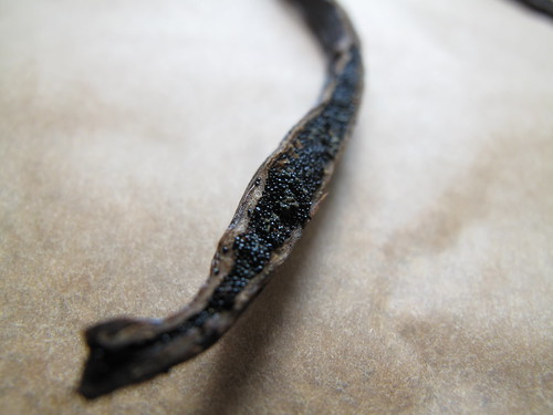 Vanilla caviar seeds