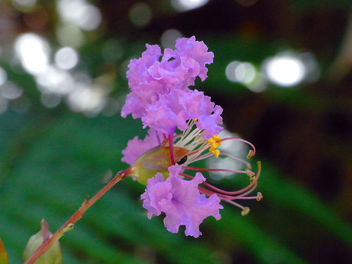 Flower-019